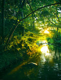 Sunset river. With calm water and vegetation Royalty Free Stock Photography