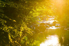Sunset river. With calm water and vegetation Stock Image