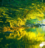 Sunset river. With calm water and vegetation Royalty Free Stock Images