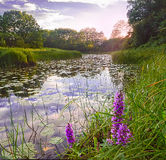 Sunset in the river backwater Stock Photography