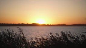 Sunset on the river bank. The orange setting sun. stock video