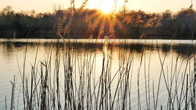 Sunset on the river bank. Summer sunset on the river bank stock footage