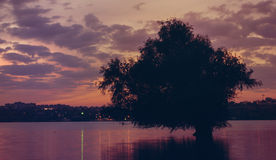Sunset on the river Danube with tree reflected in water Royalty Free Stock Images