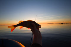 Sunset river perch fishing with the boat and a rod Stock Photos