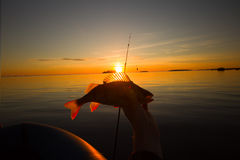 Sunset river perch fishing with the boat and a rod Royalty Free Stock Image