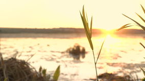 Sunset at river with seaweed and green grass. 4K stock video footage