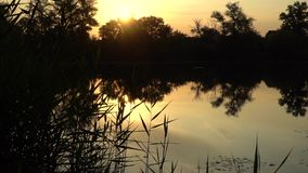 Sunset on the riverbank. Landscape with reeds and warm sun through trees on river