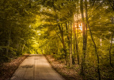 Sunset Road. Narrow country road surrounded by lush vegitation eith the evening sun shining through the trees Stock Images