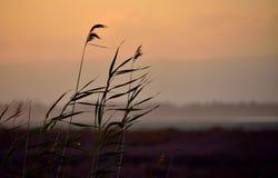 Grass at sunset Stock Image