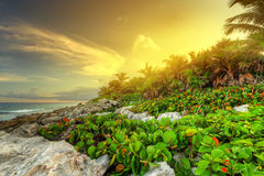 Sunset on rocky Caribbean beach. Sunset at the jungle of Caribbean Sea in Mexico Royalty Free Stock Photo