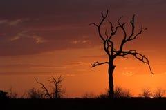 Sunset Romantic Stock Images