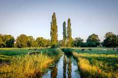 Sunset at a romantic river in Duch summer landscape Twente Royalty Free Stock Image