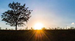 Sunset on Rural Hillside. With sunbeams, big sky, and tree stock images