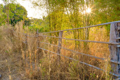 Sunset of rural scene. Sunset of the rural scene with fence and bamboos stock photos