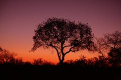 Sunset on Sabi Sands Royalty Free Stock Photo