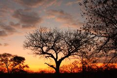 Sunset in Sabi Sands Royalty Free Stock Photo