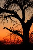 Sunset in Sabi Sands Stock Image