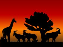 Sunset in safari Royalty Free Stock Photography