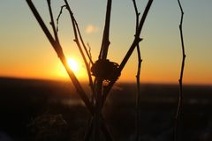 Sunset Sage royalty free stock photography
