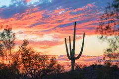 Sunset and Saguaro Cactus in Arizona royalty free stock image