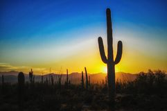 Sunset at the Saguaro National Park, Tucson AZ. Sunset at the Saguaro National Park West at Tucson, AZ. Saguaro tree in the foreground is the iconic symbol of Stock Images