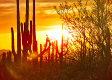 Sunset. Saguaro silhouetten against red sky at sunsett royalty free stock photography