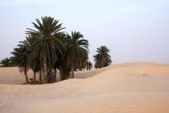 Sunset in Sahara. Palms in oasis Sahara Tunisia Stock Photo