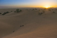 Sunset in the Sahara desert Royalty Free Stock Image