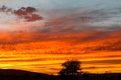 Sunset in Sahara desert royalty free stock photography