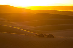 Sunset on Sahara desert Royalty Free Stock Images
