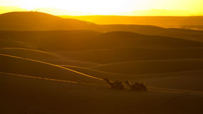 Sunset on Sahara desert Royalty Free Stock Photo