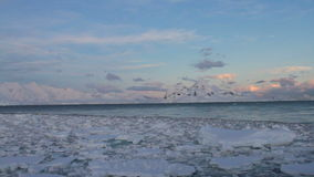 Sunset sailing through ice field stock video footage