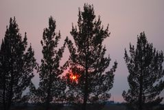 Sunset. Salt cedars in dust storm at sunset Stock Photos