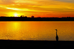 Sunset, San Diego, Mission Bay, California. A Great Blue Heron is watching the sunset at the Mission Bay park of San Diego royalty free stock photo