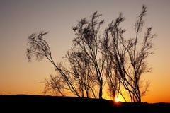 Sunset in sand desert Royalty Free Stock Image