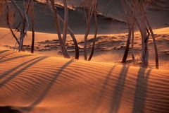 Sunset in sand desert Stock Photo