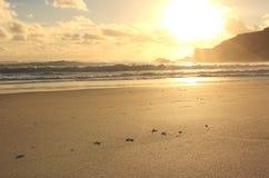 Sunset at sandy beach Stock Photo