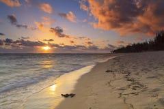Sunset on the sandy beach Royalty Free Stock Photo