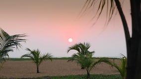 Sunset on the sandy beach stock video
