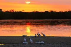 Sunset at Sanibel island, Florida Stock Photography