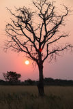 Sunset on a Savanna Stock Photo