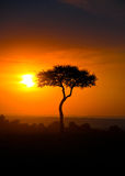 Sunset on the Savanna, Portrait. Sunset, Masai Mara National Park, Kenya Royalty Free Stock Image