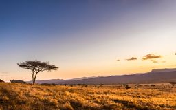 Sunset at savannah plains. Amazing sunset at savannah plains in Tsavo East National Park, Kenya royalty free stock photo