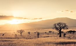 Sunset at savannah plains. Amazing sunset at savannah plains in Tsavo East National Park, Kenya stock photo