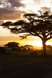 Sunset in savannah. Amboseli National Park, Kenya stock photos