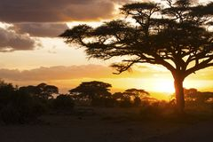 Sunset in savannah. Amboseli National Park, Kenya stock image