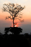 Sunset at savannah, Uganda Royalty Free Stock Photos