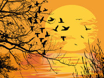 Sunset scene. The background of sunset scene Royalty Free Stock Image