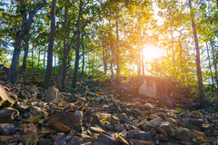 Sunset scene in the Forest.  stock image