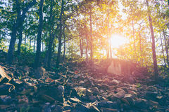 Sunset scene in the Forest with vintage tone.  stock photos